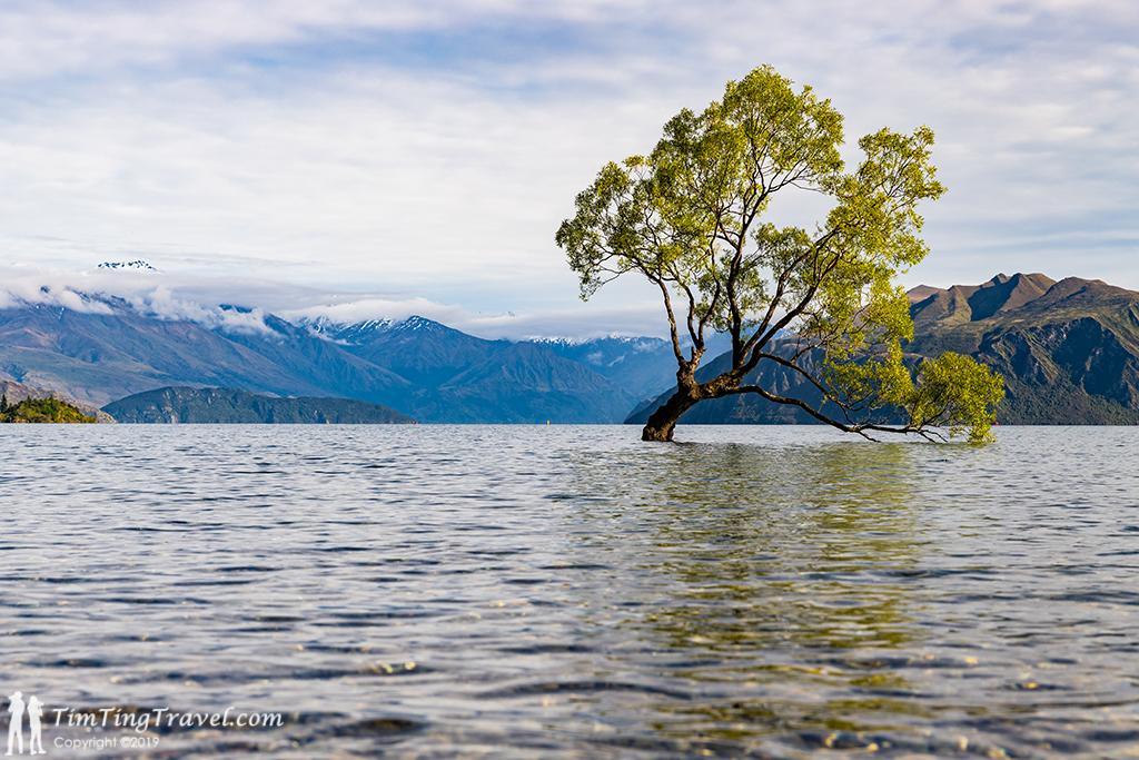 13 That Wanaka Tree (或稱為 Lonely Tree, 孤獨樹)