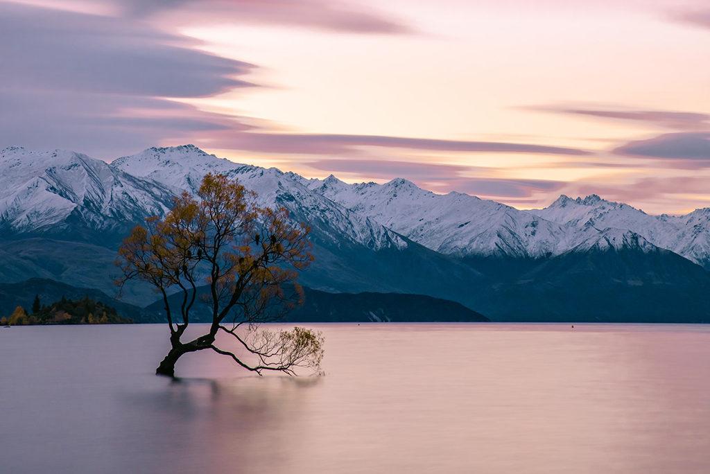 That Wanaka Tree (Lonely Tree, 孤獨樹)