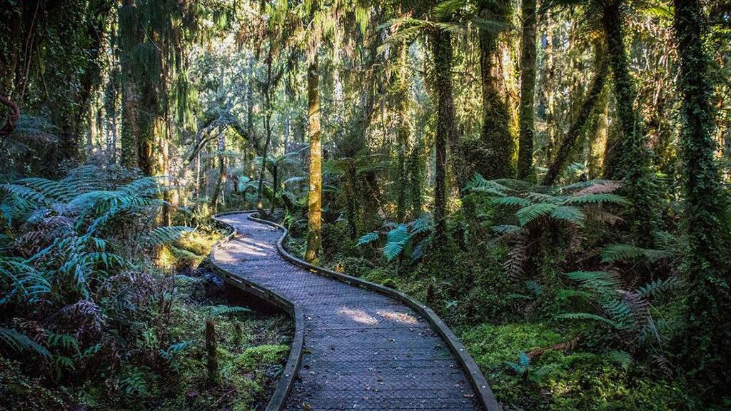 Ship Creek Walks(船溪步道):沼澤森林步道 (Swamp Forest Walk)