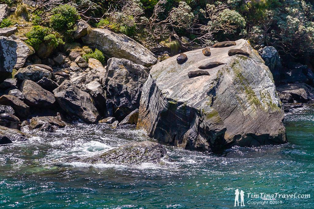 Milford Sound 沿途景色介紹: Dale Point (戴爾角) 附近的海獅石 (Seal Rock)