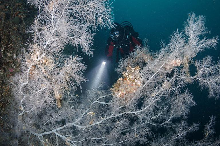 Milford Sound 必遊景點 #5 - Milford Sound Dive Trip (潛水之旅)