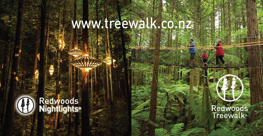 Redwoods (紅木森林公園) 最熱門步道 Treewalk,可白天或晚上參訪。