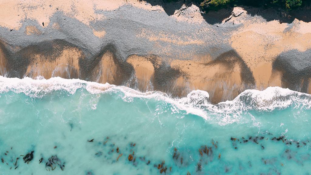 Oamaru 必遊景點 #3 - Yellow Eyed Penguin Colony: Bushy Beach Scenic Reserve (黃眼企鵝棲息地 - 叢林海灘風景區)