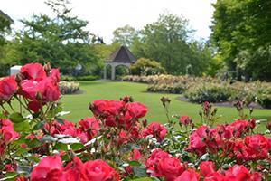 Roger Rose Garden