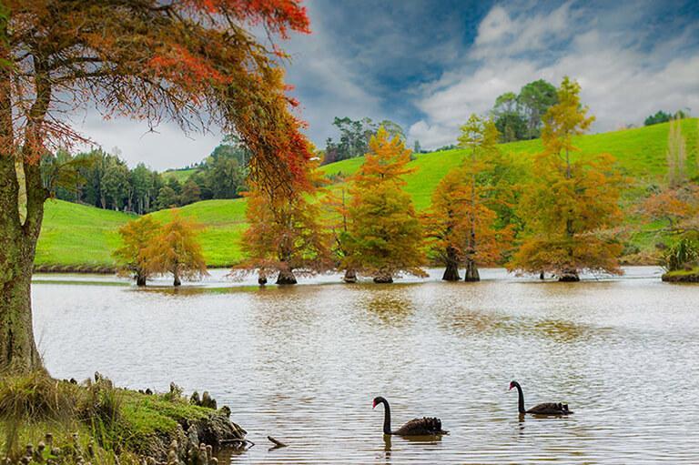 McLaren Falls Park 景點#2 - Lake McLaren (邁凱倫湖)