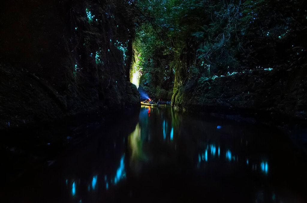 McLaren Falls Park 景點#3 - Glowworm Cave (螢火蟲洞)