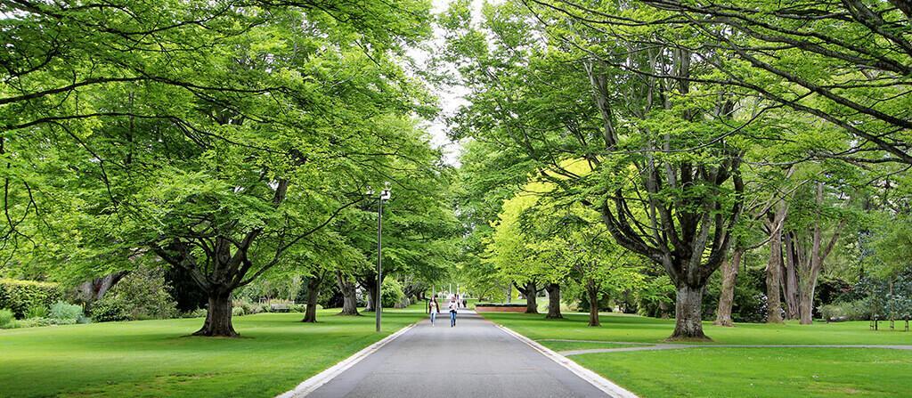 Queens Park 皇后公園的林蔭步道