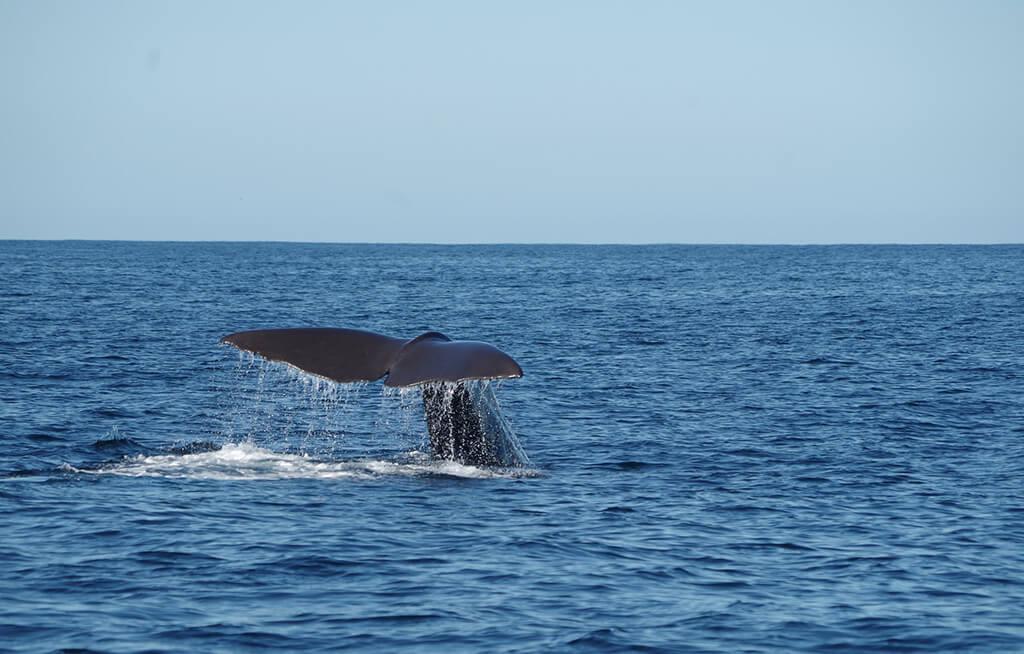 Kaikōura 必遊景點 #1 - Whale Watch Kaikōura (觀鯨凱庫拉)