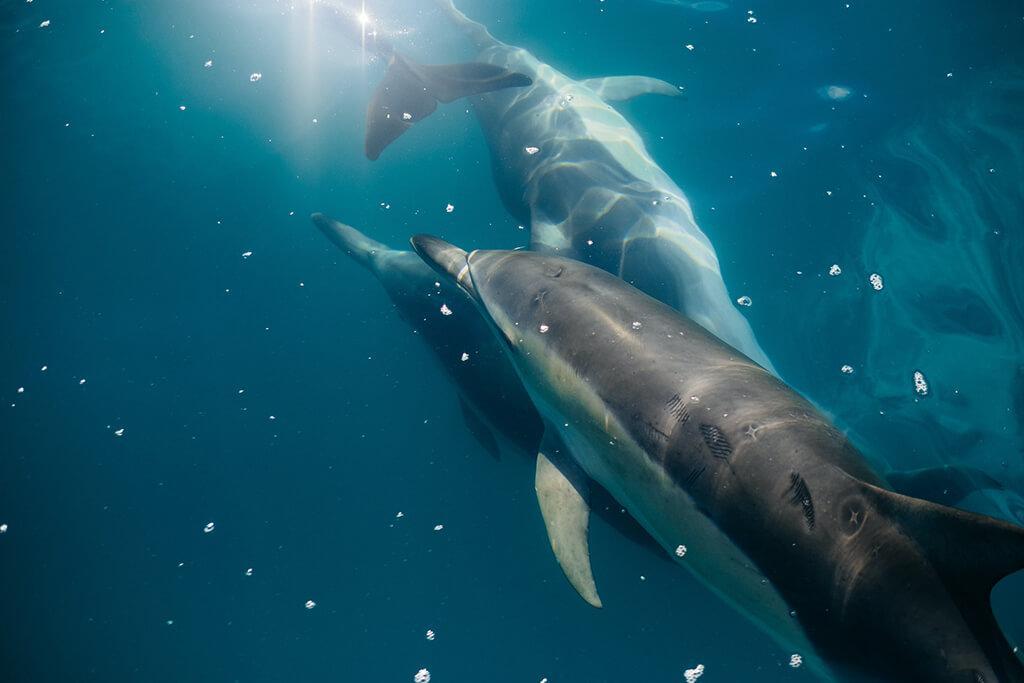 Kaikōura 必遊景點 #2 - Encounter Kaikōura (Dolphin Encounter) - 與海豚共游