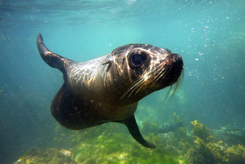 Kaikōura 必遊景點 #3 - Seal Swim Kaikōura (與海豹共游)