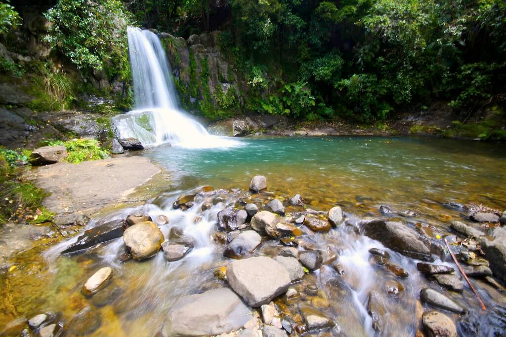 Coromandel 必遊景點 #5 - Waiau Falls (懷奧河瀑布)